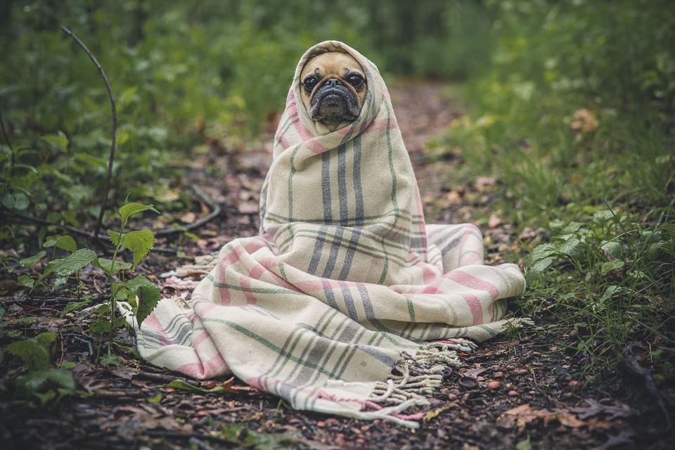 Blog consacré aux chiens