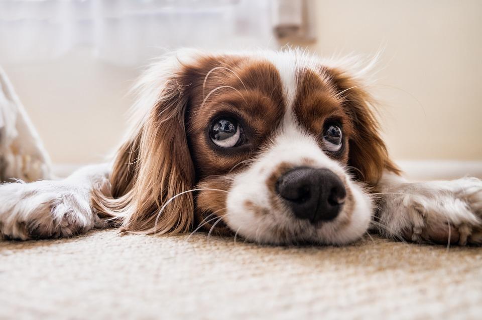 Informez-vous sur les chiens
