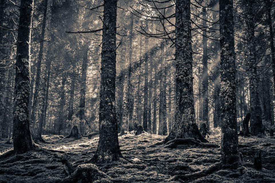 Votre option de jeux en forêt