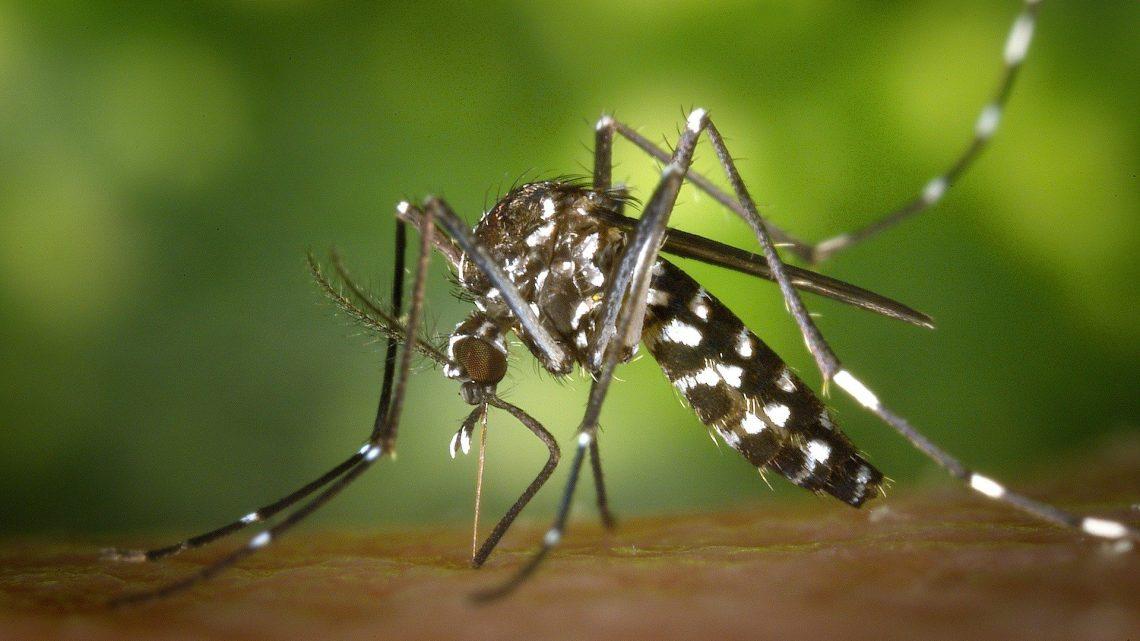 Lutter facilement contre le moustique